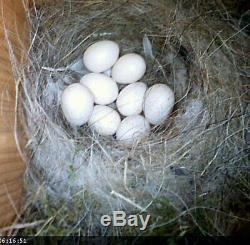 Bird Nest Box with High Spec 700TVL Colour CCTV Camera Gift For Bird Lovers 30m
